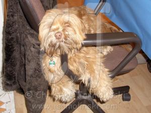 Lakshmi, my studio dog......