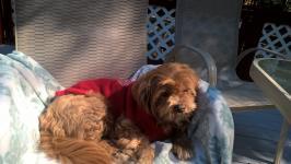 Sunning myself on the deck